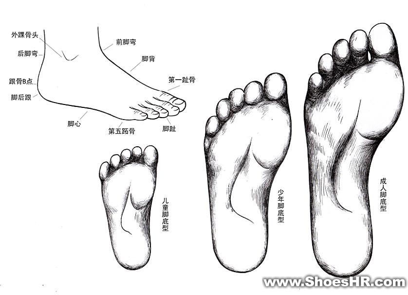 脚钢笔素描图,武金轩--中国鞋业设计师网